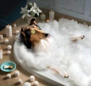 Funny-Dog-Image